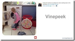 vinepeek3