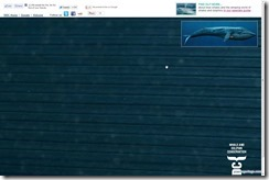 whale3