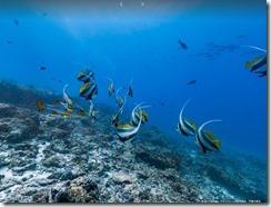 googleocean2