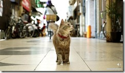 catstreet1