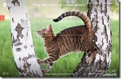mycats4