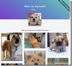 dogfinder2