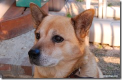 dogfinder4